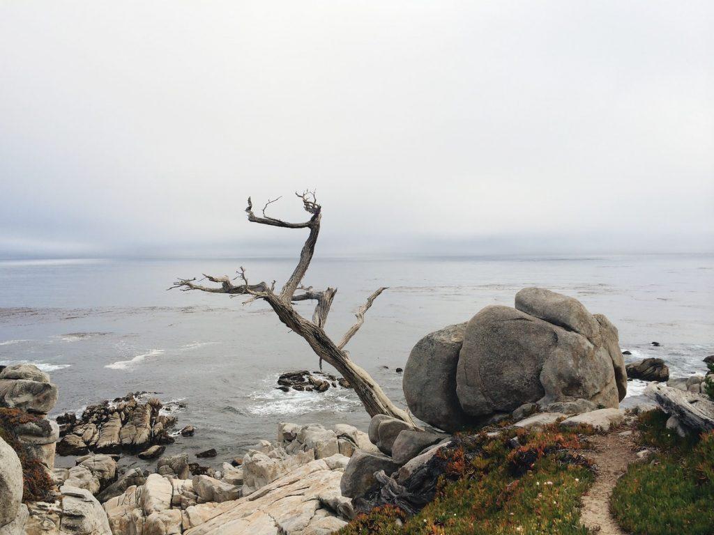 Dead tree by seashore unsplash @kirillz